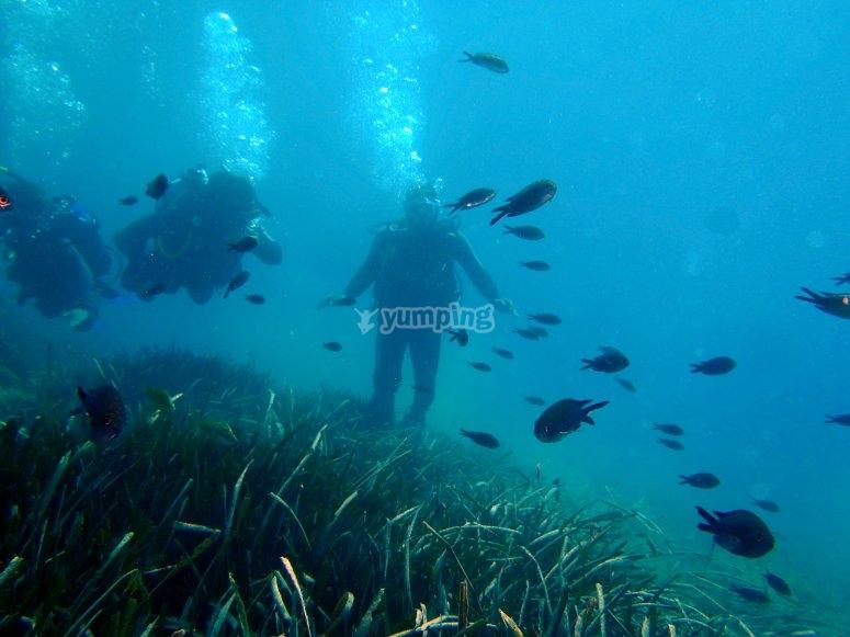 Inmersión de bautismo en Aguadulce