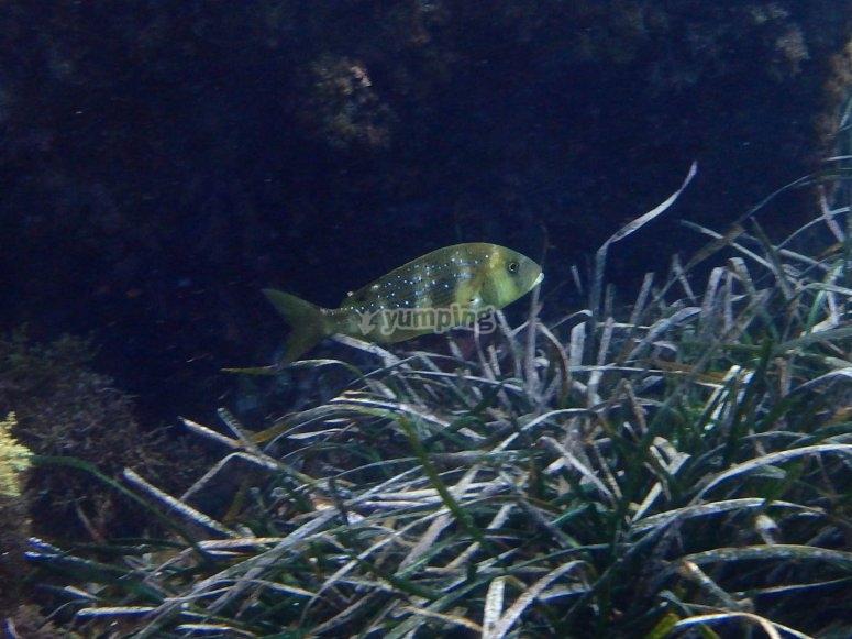 Peces bajo el agua