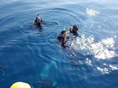 Pack 4 inmersiones en Canet con equipo y 1 gratis