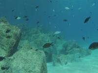 Tra i pesci