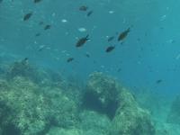 Molta vita marina