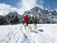 Mushing with Single Sleigh in Valle Partacua, 1h