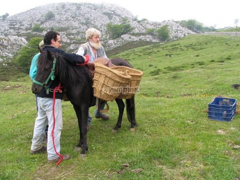 Lagos de Covadonga, elaboración del Queso Gamoneu