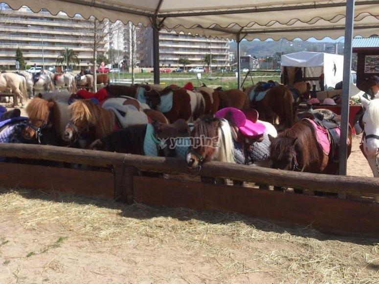 Ponys alineados