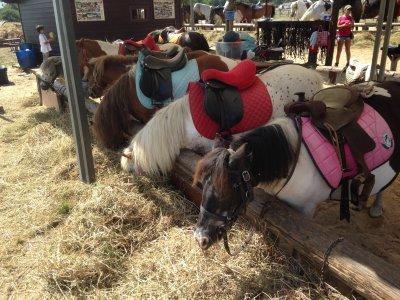 45 min riding a pony in Laredo, Cantabria