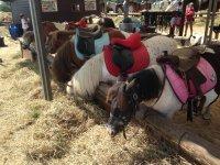 Ponys en las instalaciones