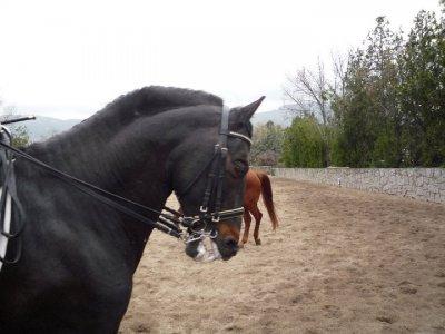 骑马穿过埃斯科里亚尔,1小时