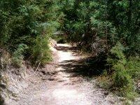 距离海岸自行车道穿过灌木丛