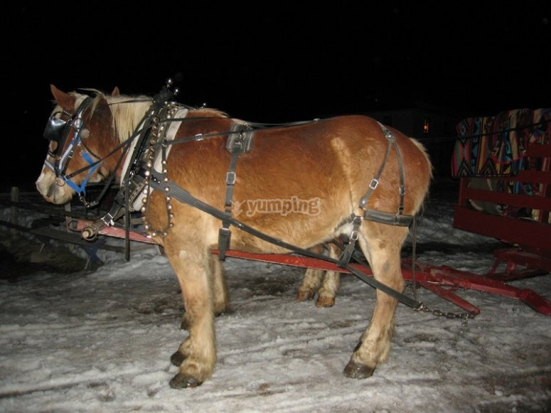 Horses with sled at night