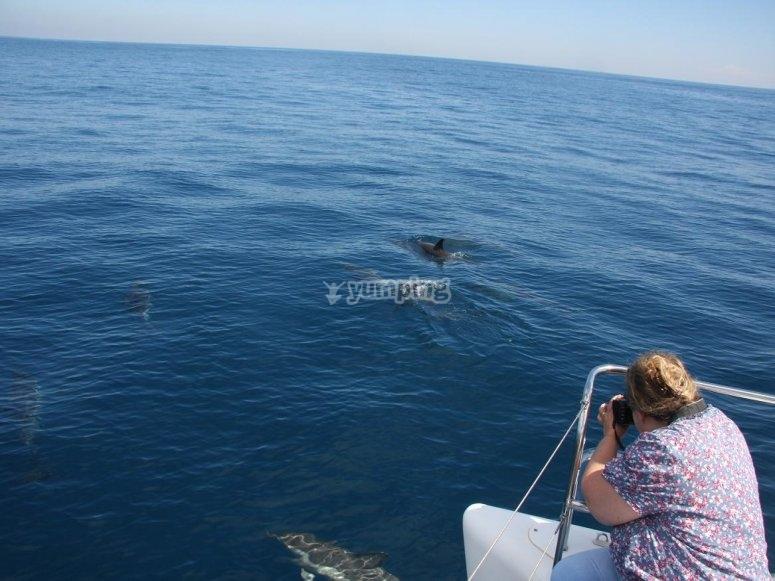 Sighting marine mammals from the boat