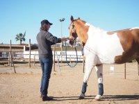 Con el caballo en el picadero