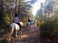 Hilera de caballos en el campo