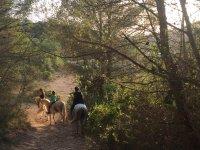 Recorriendo el bosque a caballo
