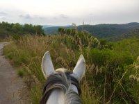 骑在大自然漫步森林
