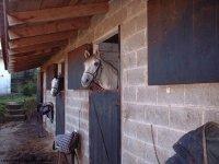 El caballo asomado
