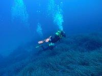 Buceadores sobre vegetacion submarina