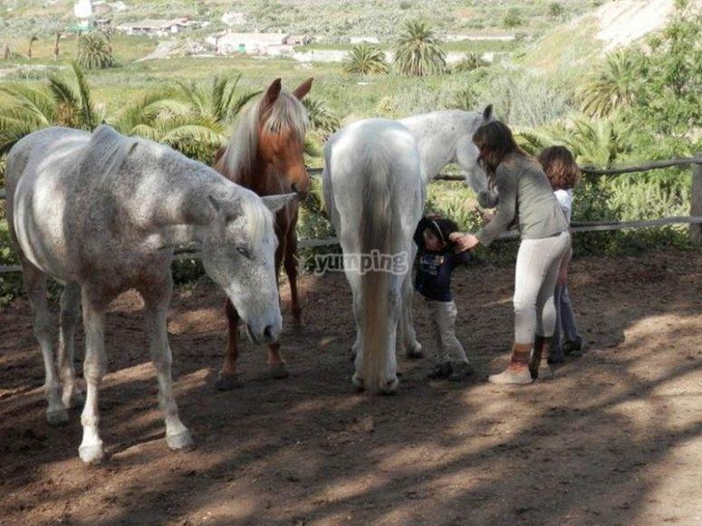 Ruta a caballo en Gran Canaria