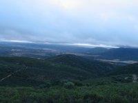 Montes de Toledo的橡树林中