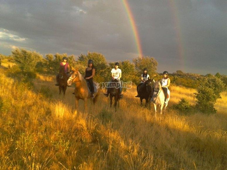 Caballos con el arco iris de fondo