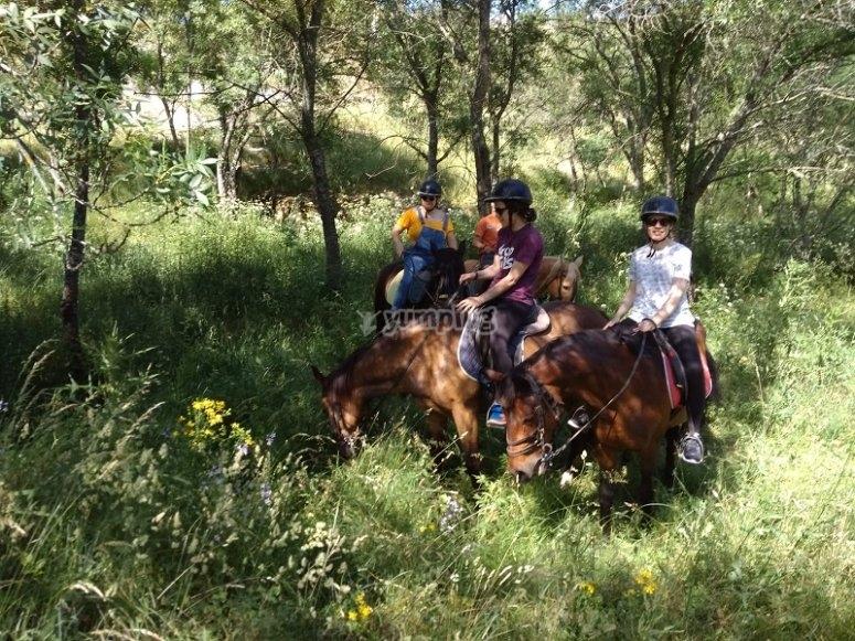 Equinos en el bosque