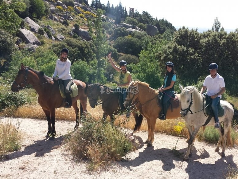 Grupo de caballos