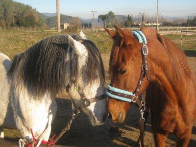 Clase + ruta a caballo, iniciación, 1 h