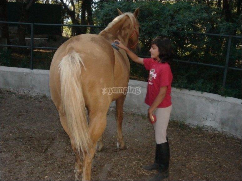 cuidando a los equinos