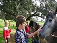 Activities with horses are a unique experience for children, since these animals are very docile and intelligent.