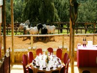 The experience of eating and enjoying the world of bull and horse