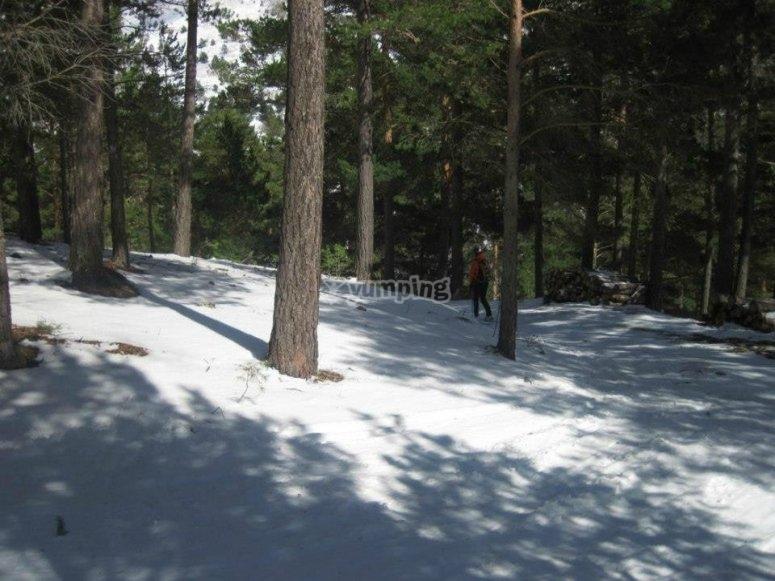 Atravesando los bosques granadinos en raqueta de nieve