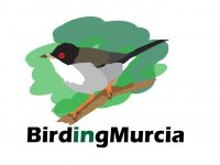 BirdingMurcia Ornitología