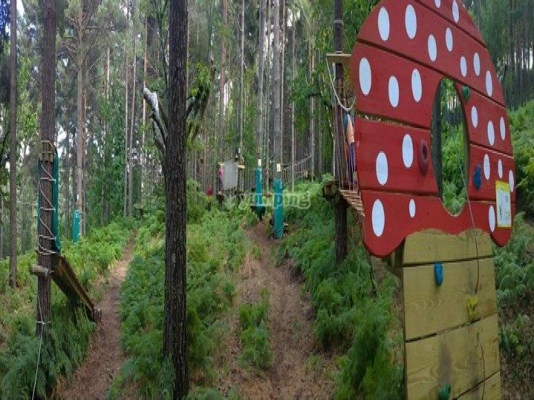 avventura tra gli alberi