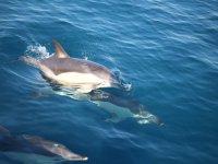 Delfines en el Estrecho