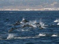 Grupo de delfines en Cádiz
