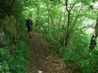 Camino hacia el interior del bosque