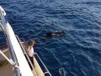 Delfines a unos metros de distancia