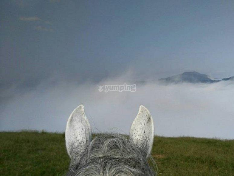 Cavallo rivolto verso l'orizzonte