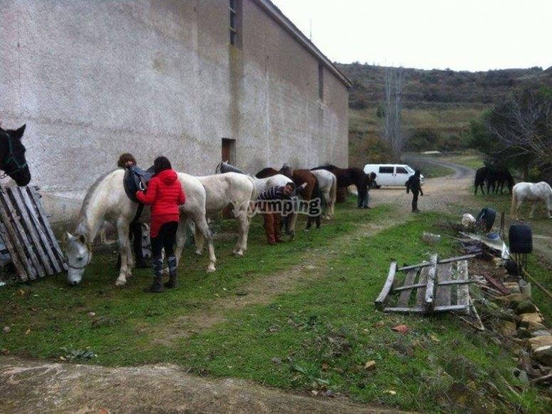 Preparazione dei cavalli