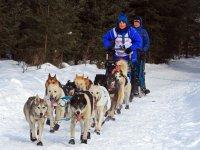 通往蒙加里的狗拉雪橇