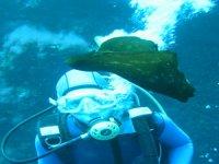 Gran liebre marina