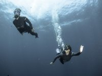 Flora and fauna underwater