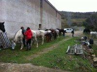 Ruta a caballo a la Foz de Lumbier, media jornada