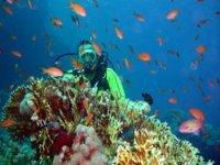 Malvinas reef