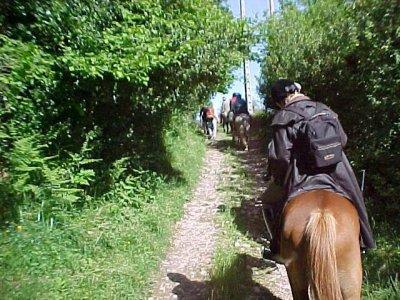 Horse riding through Verdugo River, 2 hours.