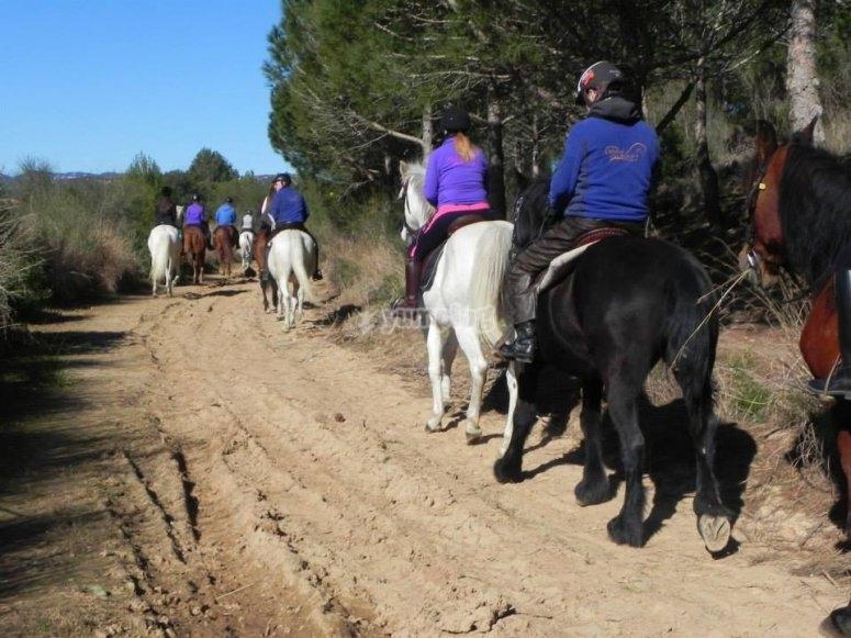马在路线上前进