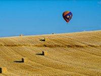 Volando sobre la cosecha