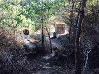 Arboles y rocas