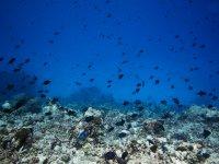 Curso open water en el Mediterráneo
