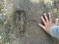 Alla scoperta di impronte