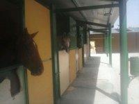 Tu caballo como en casa